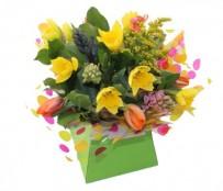 Daffodil City Box